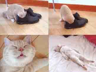 feetstink.jpg